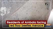Residents of Ambala facing red flour beetles menace