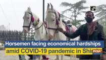 Horsemen facing economical hardships amid COVID-19 pandemic in Shimla