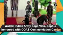 Watch: Indian Army dogs Vida, Sophie honoured with COAS Commendation Cards
