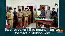 Six arrested for killing pregnant buffalo for meat in Malappuram