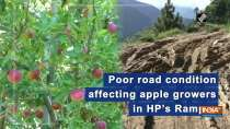 Poor road condition affecting apple growers in HP