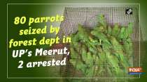 80 parrots seized by forest dept in UP