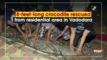 8-feet-long crocodile rescued from residential area in Vadodara