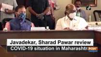 Javadekar, Sharad Pawar review COVID-19 situation in Maharashtra