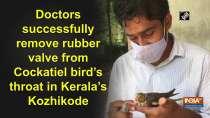 Doctors successfully remove rubber valve from Cockatiel bird