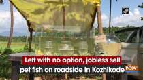 Left with no option, jobless sell pet fish on roadside in Kozhikode