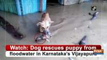 Watch: Dog rescues puppy from floodwater in Karnataka