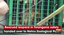 Rescued leopard in Telangana safely handed over to Nehru Zoological Park