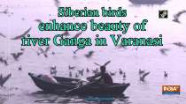 Siberian birds enhance beauty of river Ganga in Varanasi