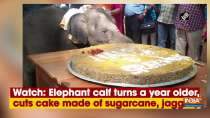 Watch: Elephant calf turns a year older, cuts cake made of sugarcane, jaggery