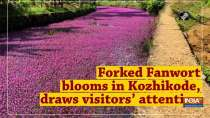 Forked Fanwort blooms in Kozhikode, draws visitors