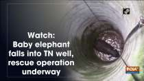 Watch: Baby elephant falls into TN well, rescue operation underway
