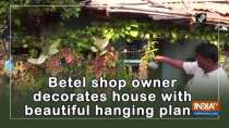 Betel shop owner decorates house with beautiful hanging plants