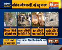 Bird flu: 1,800 migratory birds found dead in Himachal, outbreak reported in four states now