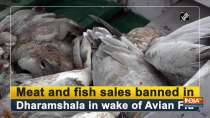 Meat and fish sales banned in Dharamshala in wake of Avian Flu