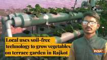 Local uses soil-free technology to grow vegetables on terrace garden in Rajkot