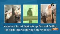 Vadodara forest dept sets up first aid facility for birds injured during Uttarayan festival