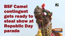 BSF Camel contingent gets ready to steal show at Republic Day parade