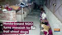 Noida-based NGO turns messiahfor street dogs