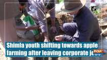 Shimla youth shifting towards apple farming after leaving corporate jobs