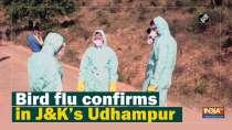 Bird flu confirms in JandK