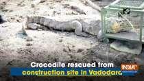 Crocodile rescued from construction site in Vadodara