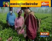 Video: Priyanka Gandhi plucks tea leaves with other cong workers at Sadhuru tea garden, Biswanath
