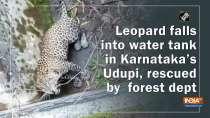 Watch: Leopard falls into water tank in Karnataka