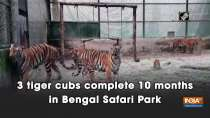 3 tiger cubs complete 10 months in Bengal Safari Park