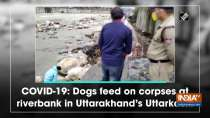 COVID-19: Dogs feed on corpses at riverbank in Uttarakhand