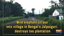 Wild elephant strays into village in Bengal