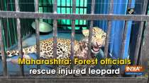 Maharashtra: Forest officials rescue injured leopard