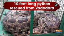 10-feet long python rescued from Vadodara