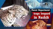 Leopard falls into trap set up by Forest Department in Nashik