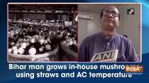 Bihar man grows in-house mushrooms using straws and AC temperature