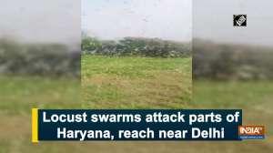Locust swarms attack parts of Haryana, reach near Delhi