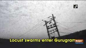 Locust swarms enter Gurugram