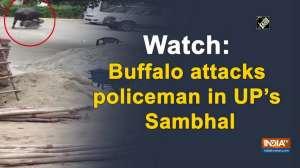 Watch: Buffalo attacks policeman in UP's Sambhal
