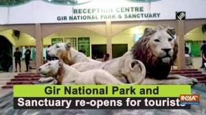 Gir National Park and Sanctuary re-opens for tourists