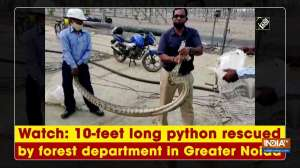 Watch: 10-feet long python rescued by forest department in Greater Noida