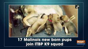 17 Malinois new born pups join ITBP K9 squad