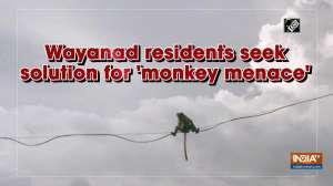 Wayanad residents seek solution for 'monkey menace'