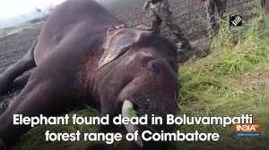 Elephant found dead in Boluvampatti forest range of Coimbatore
