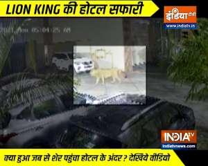 Wild lion enters hotel compound in Junagarh, Gujarat | Watch video