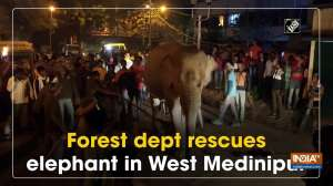 Forest dept rescues elephant in West Medinipur