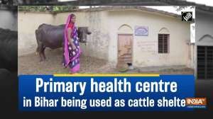 Primary health centre in Bihar being used as cattle shelter