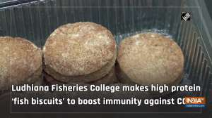 Ludhiana Fisheries College makes high protein 'fish biscuits' to boost immunity against COVID