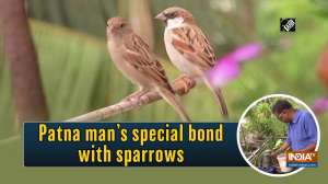 Patna man's special bond with sparrows