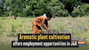 Aromatic plant cultivation offers employment opportunities in JandK