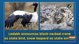 Ladakh announces black-necked crane as state bird, snow leopard as state animal